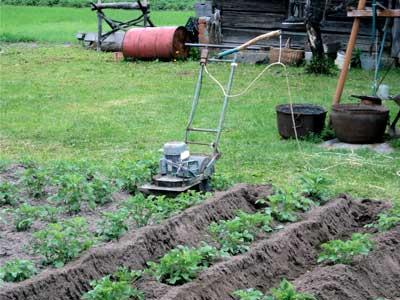 Большое земледелие произошло